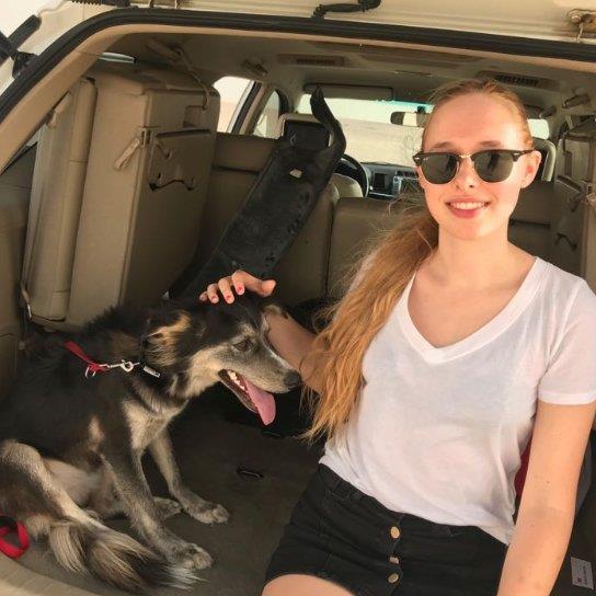 Skittles Pet Bo dog boarding Dubai your kennel and dog hotel alternative