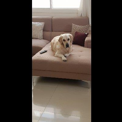 The Perfect Pet dog boarding Doha your kennel and dog hotel alternative
