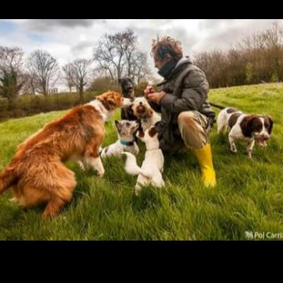Friendly and ex dog boarding Dubai your kennel and dog hotel alternative