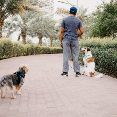 Your Furchild's dog boarding Dubai your kennel and dog hotel alternative