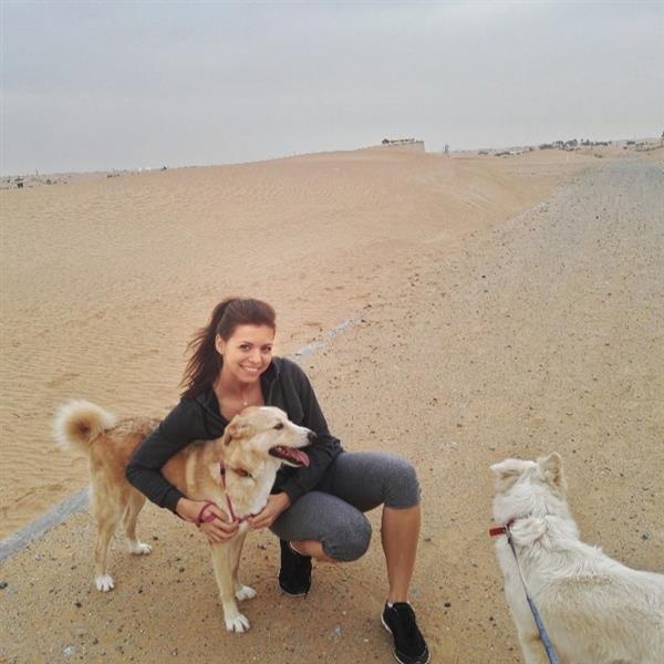 Your pet family dog boarding Dubai your kennel and dog hotel alternative