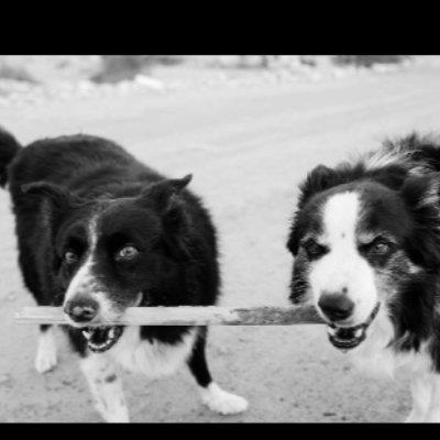 British dog wal dog boarding Dubai your kennel and dog hotel alternative