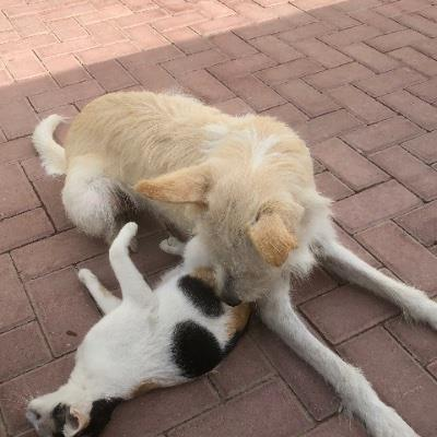 pet lover house dog boarding Dubai better than kennels and dog hotels