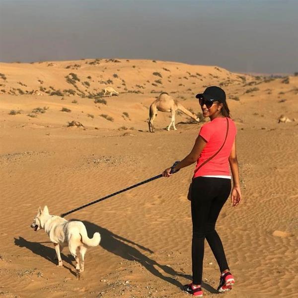 Trustworthy & R dog boarding Dubai your kennel and dog hotel alternative