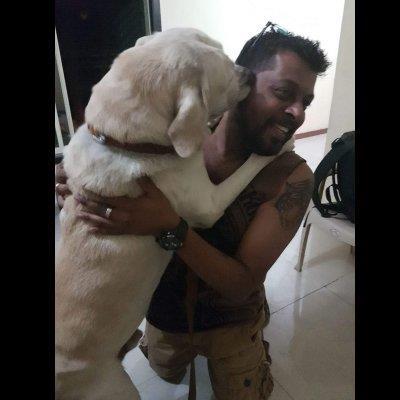 Trusted Dog Wal dog boarding Hawalli your kennel and dog hotel alternative