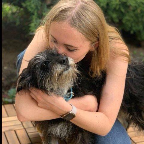 Pets best friend dog boarding Dubai better than kennels and dog hotels