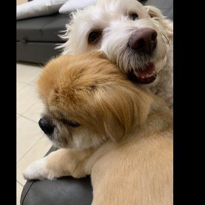 Hello from kiki dog boarding Dubai your kennel and dog hotel alternative