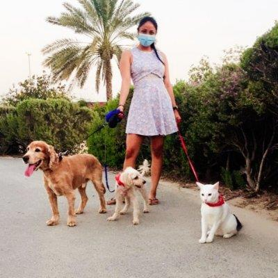 Guardians of th dog boarding Dubai your kennel and dog hotel alternative