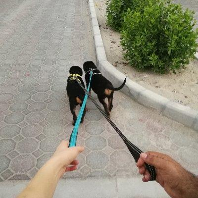 Love Dogs & Cats dog boarding Abu Dhabi better than kennels and dog hotels