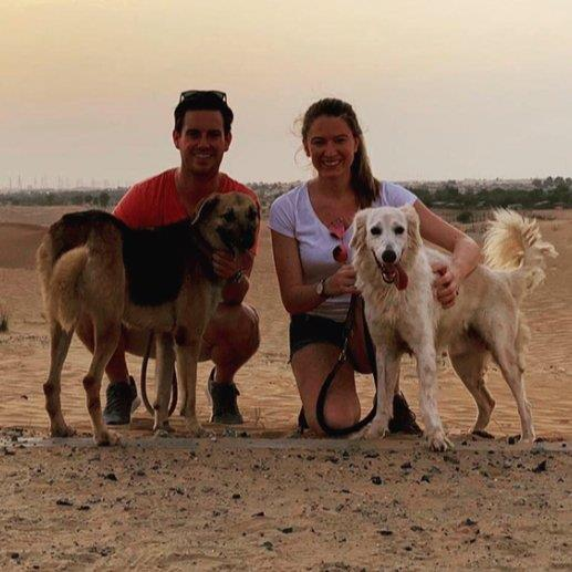 experienced par dog boarding Dubai your kennel and dog hotel alternative