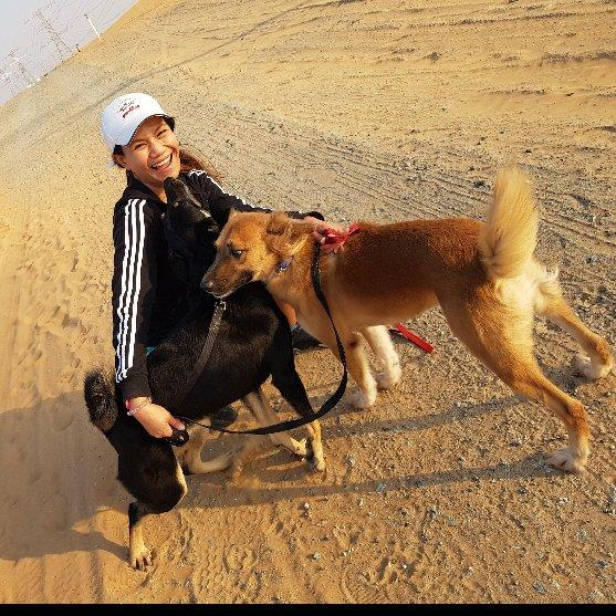Passionate Dog Lover dog boarding Dubai better than kennels and dog hotels
