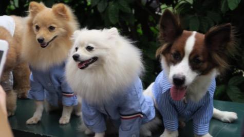 Clara Dog boarding, Pet Boarding, Dog Walking and Pet Sitting.