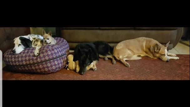 Georgia Dog boarding, Pet Boarding, Dog Walking and Pet Sitting.