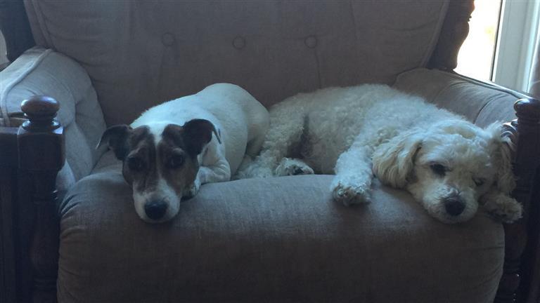 Marie-louise Dog boarding, Pet Boarding, Dog Walking and Pet Sitting.