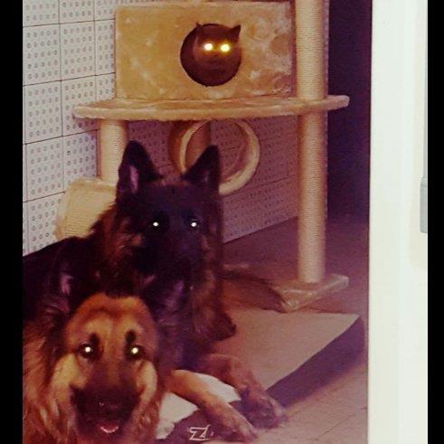 Ghadir Pet hotel experience in real homes! 2