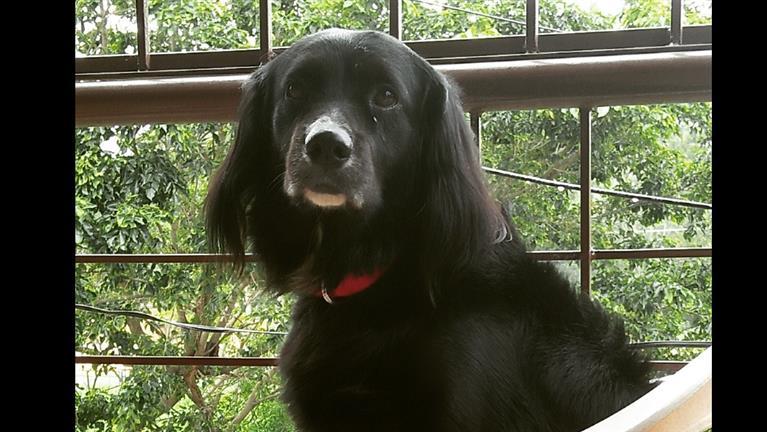 Colette Dog boarding, Pet Boarding, Dog Walking and Pet Sitting.