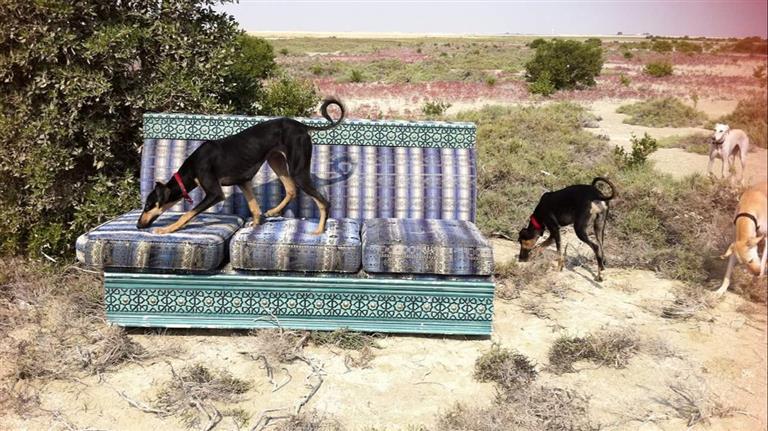 Ingrid Dog boarding, Pet Boarding, Dog Walking and Pet Sitting.