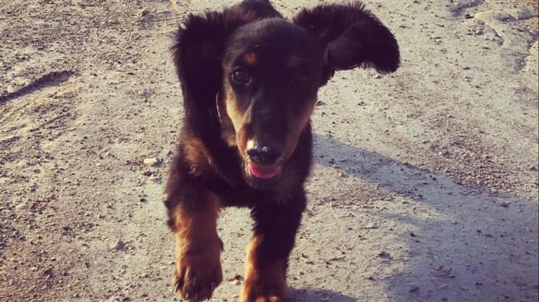 Lydia Dog boarding, Pet Boarding, Dog Walking and Pet Sitting.