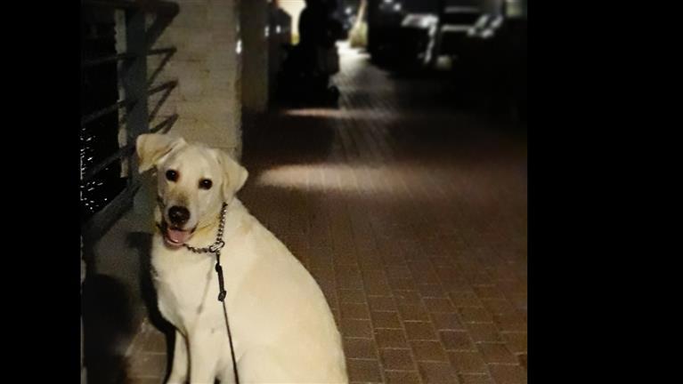 Arshia Dog boarding, Pet Boarding, Dog Walking and Pet Sitting.