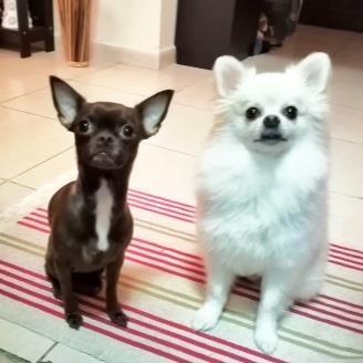 Natalia Posada Pet hotel experience in real homes! 8