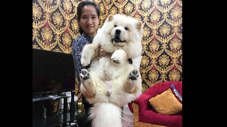 Christina Dog boarding, Pet Boarding, Dog Walking and Pet Sitting.