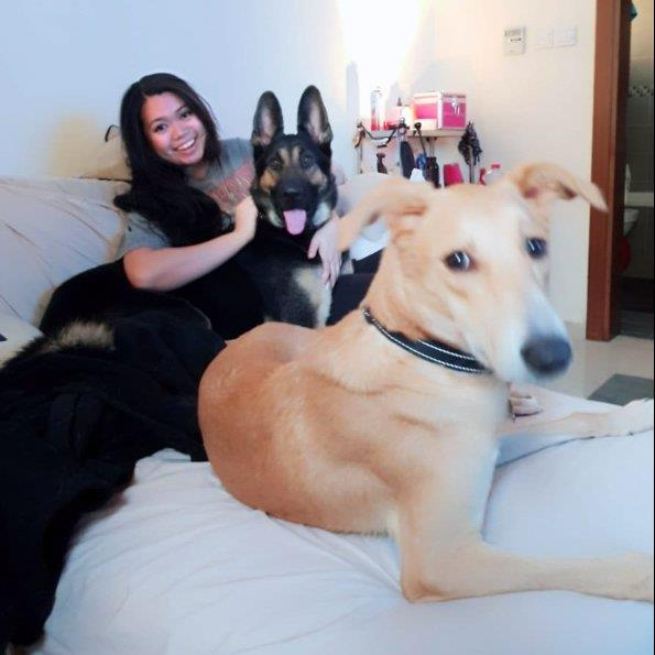 Karla Pet hotel experience in real homes! 3