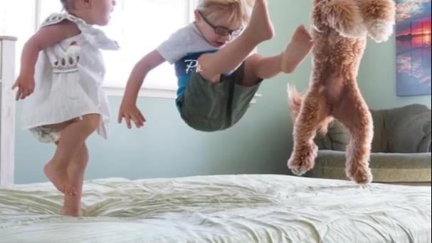 Daniela Dog boarding, Pet Boarding, Dog Walking and Pet Sitting.