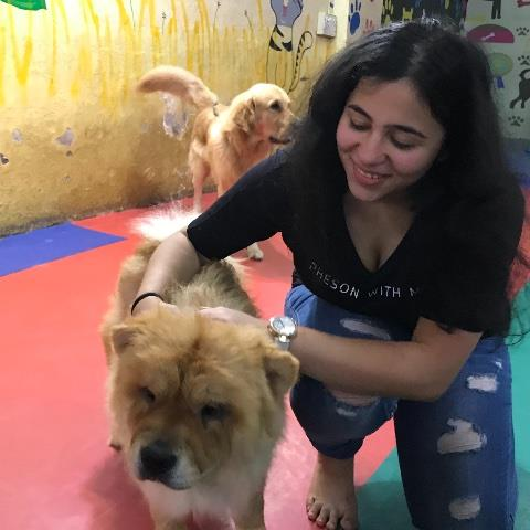 Rrushali Pet hotel experience in real homes! 1