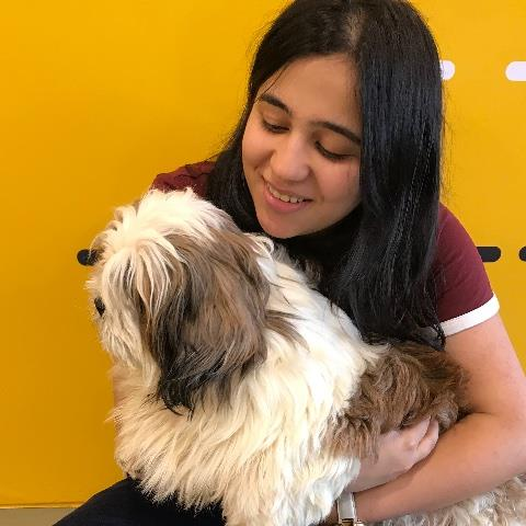 Rrushali Pet hotel experience in real homes! 3