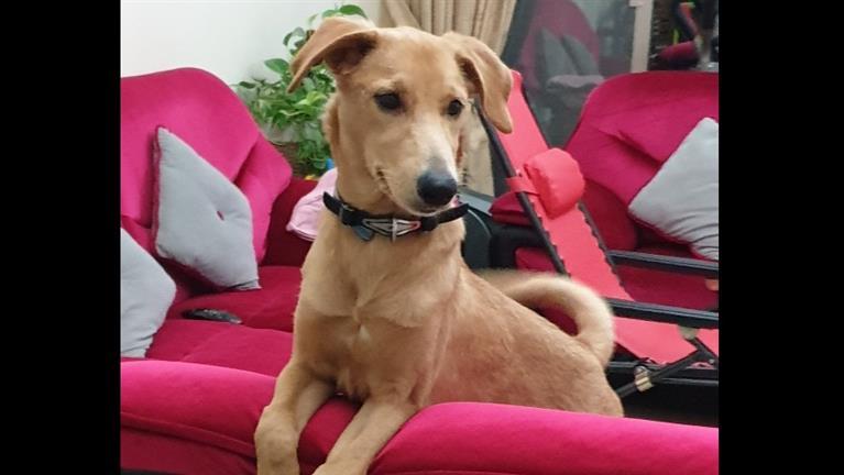 Sangeetha  Dog boarding, Pet Boarding, Dog Walking and Pet Sitting.