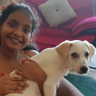 Sangeetha  Pet hotel experience in real homes! 5