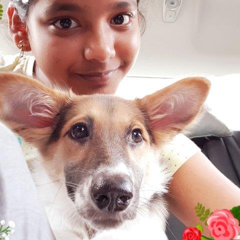 Sangeetha  Pet hotel experience in real homes! 21