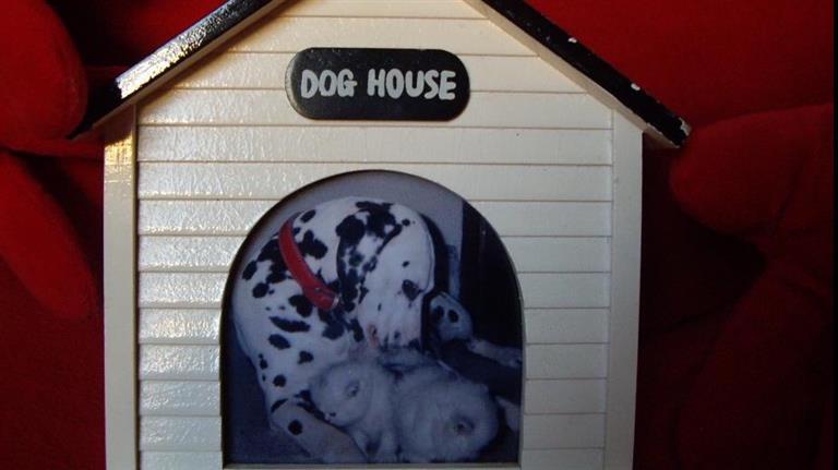 Nadia Dog boarding, Pet Boarding, Dog Walking and Pet Sitting.