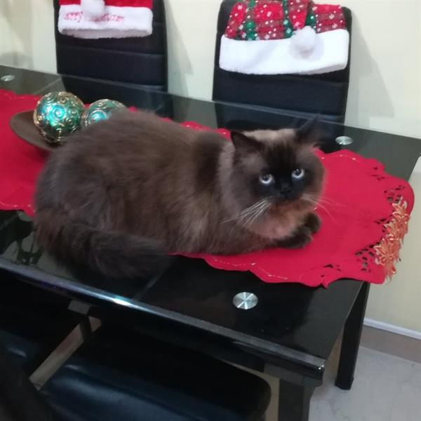 Kushal Pet hotel experience in real homes! 1