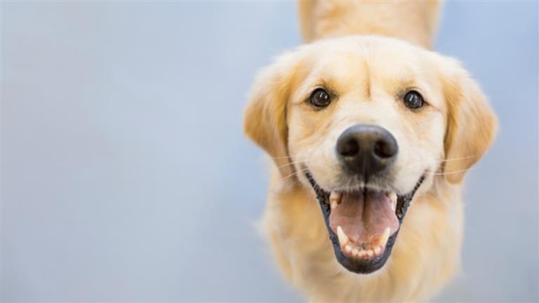 Eoghain Dog boarding, Pet Boarding, Dog Walking and Pet Sitting.