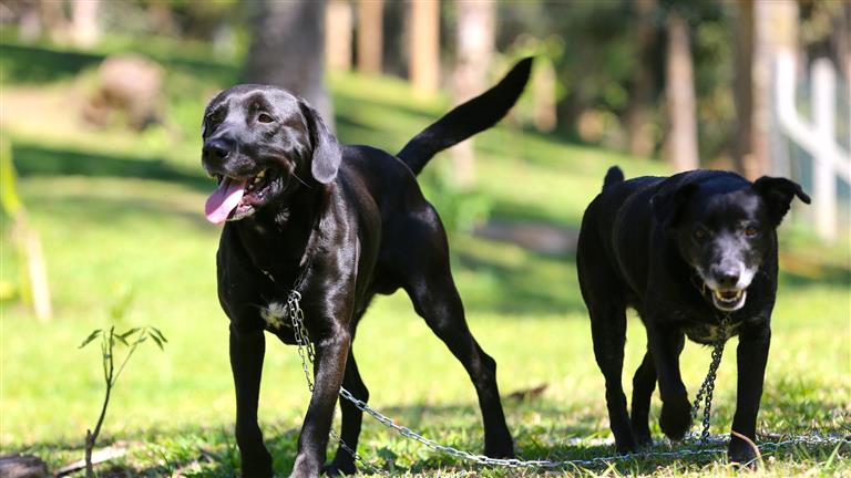 Liamara Dog boarding, Pet Boarding, Dog Walking and Pet Sitting.