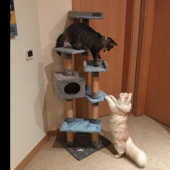 Rachel Pet hotel experience in real homes! 3