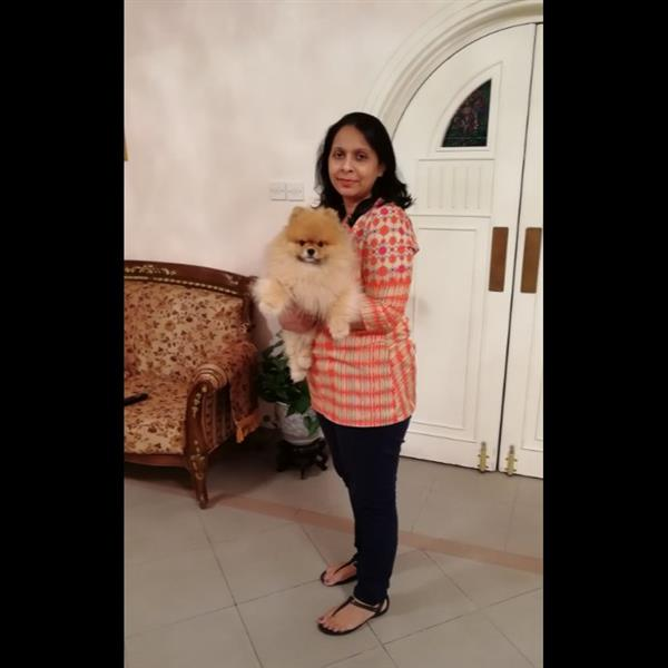 Leena Pet hotel experience in real homes! 3
