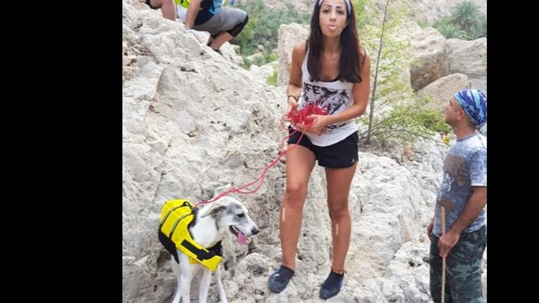 Angham Dog boarding, Pet Boarding, Dog Walking and Pet Sitting.