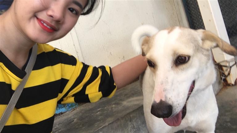 Rhodessa Dog boarding, Pet Boarding, Dog Walking and Pet Sitting.