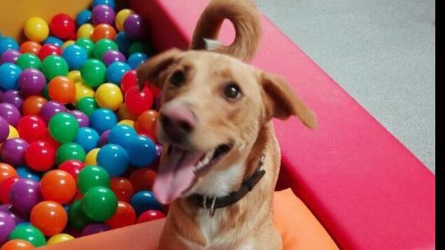 Michelle Dog boarding, Pet Boarding, Dog Walking and Pet Sitting.