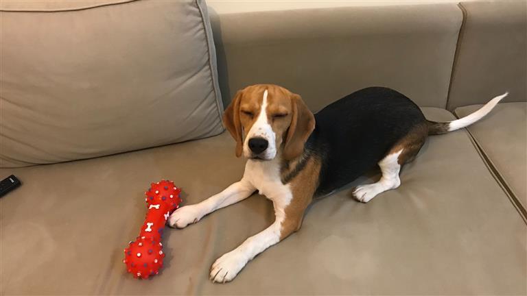 Vanessa Dog boarding, Pet Boarding, Dog Walking and Pet Sitting.