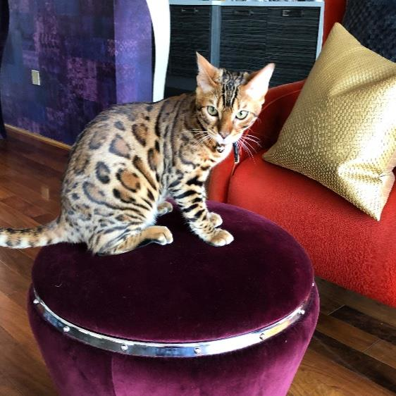 Merim Pet hotel experience in real homes! 6