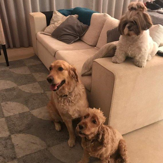 Milani Pet hotel experience in real homes! 3