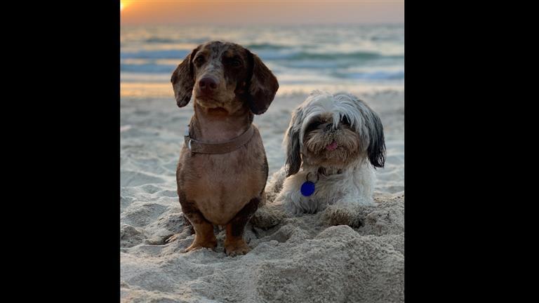 Rebecca  Dog boarding, Pet Boarding, Dog Walking and Pet Sitting.