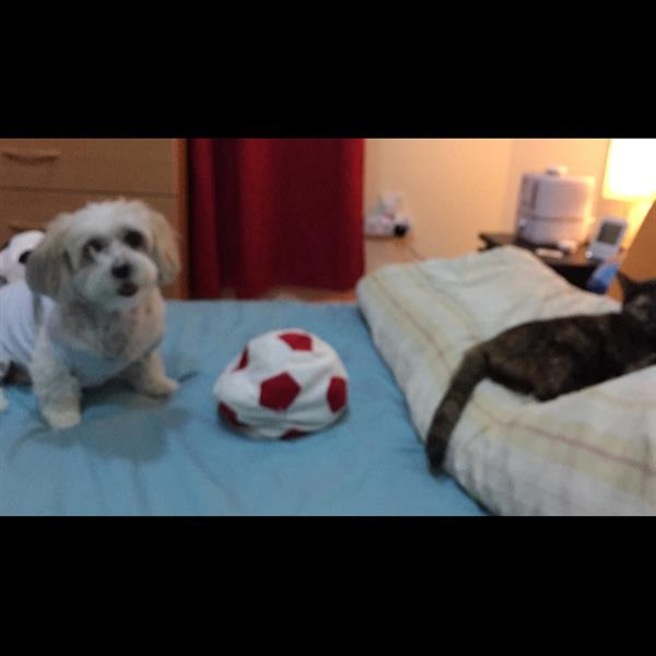 MARIA ANDREA Pet hotel experience in real homes! 1