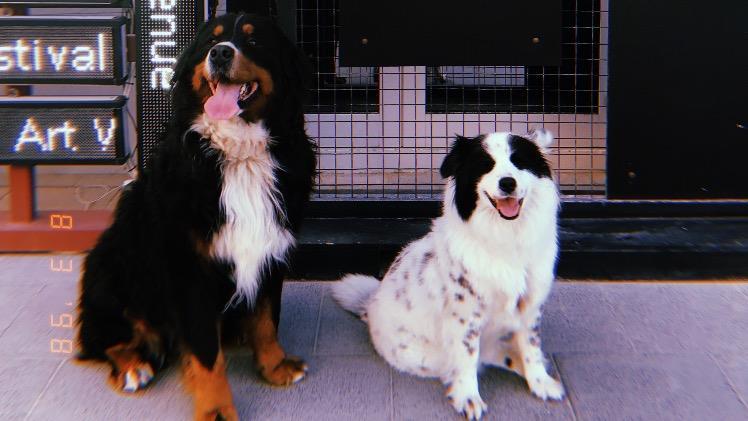 Gulsah Dog boarding, Pet Boarding, Dog Walking and Pet Sitting.