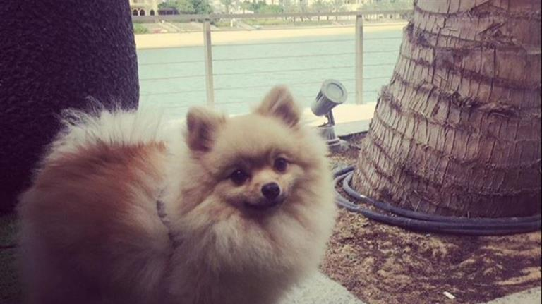 Ahsan Dog boarding, Pet Boarding, Dog Walking and Pet Sitting.