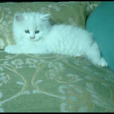 Ahsan Pet hotel experience in real homes! 3
