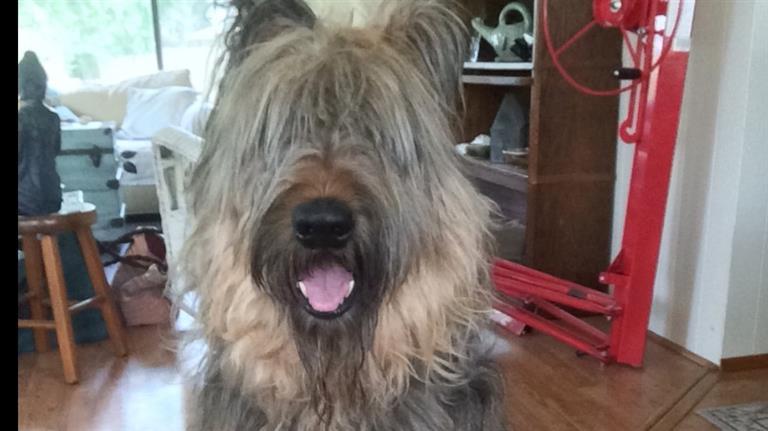 Tess Dog boarding, Pet Boarding, Dog Walking and Pet Sitting.